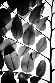 Branches-And-Leaves-Ii-|-Limited-Edition-Fine-Art-Print-1-Of-10_Tal-Paz-Fridman_Treniq_0