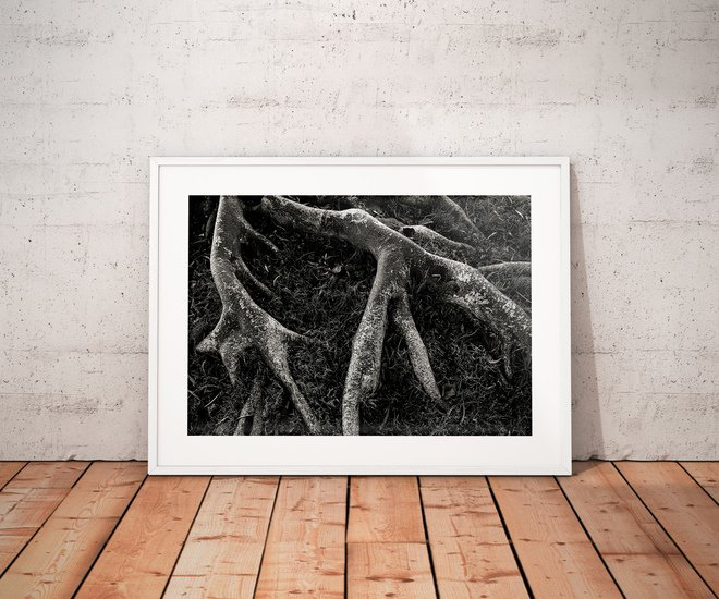 Roots ii   limited edition fine art print 1 of 10 tal paz fridman treniq 1 1580394811804