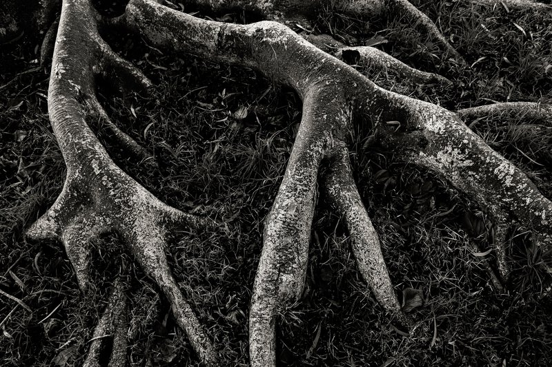 Roots ii   limited edition fine art print 1 of 10 tal paz fridman treniq 1 1580394822851