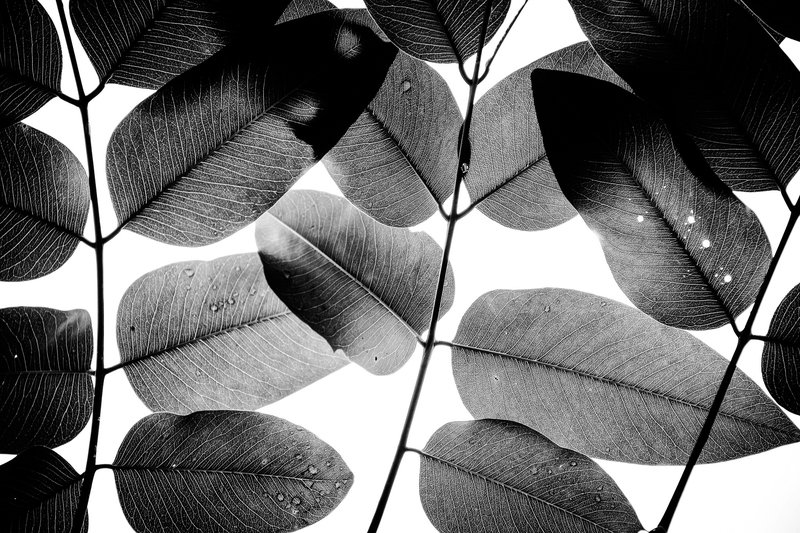 Experiments with leaves ii   limited edition fine art print 1 of 10 tal paz fridman treniq 1 1581000202444