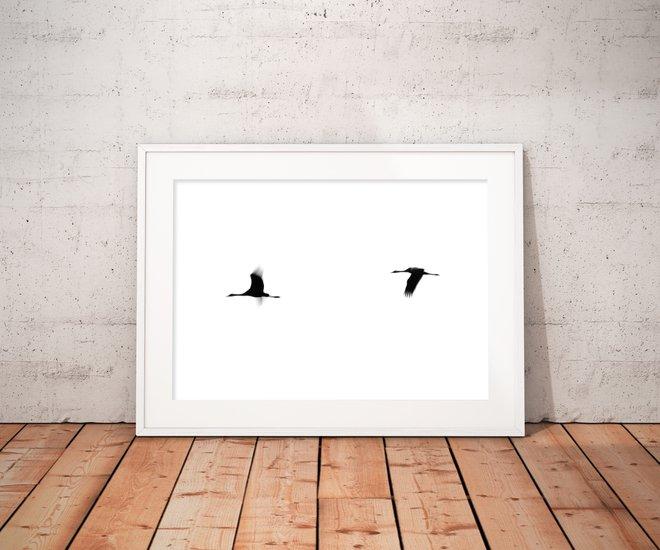 Crane(s) ii   limited edition fine art print 1 of 10 tal paz fridman treniq 1 1581521651866