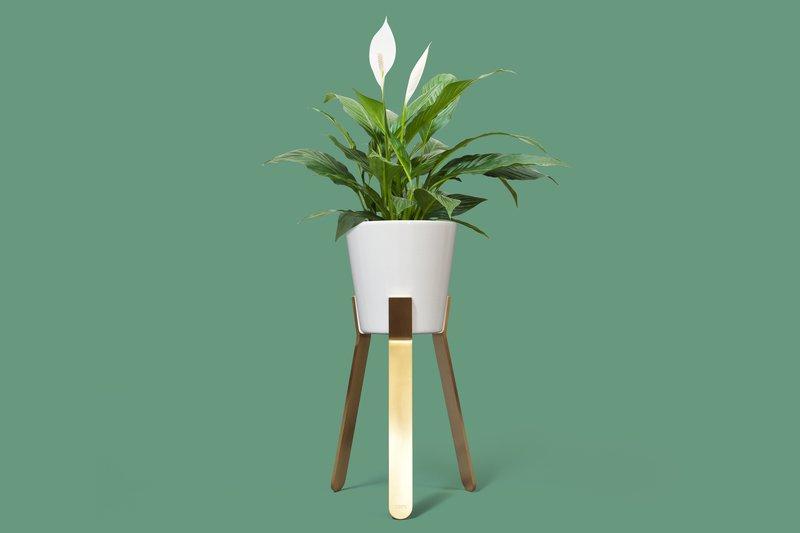 Syml brass plant stand jam furniture treniq 1 1582228873129