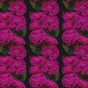 Chrysanths Nuit Wallpaper - Lux & Bloom - Treniq