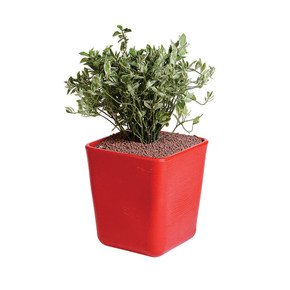 Sereno Bello Planters Rounded Rectangle Short - Sereno - Treniq