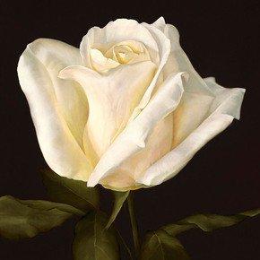 White Rose Painting - Deborah Bigeleisen - Treniq