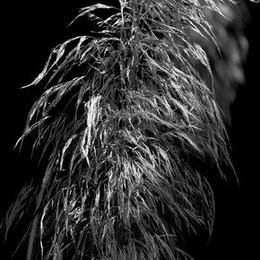 Light-Shadows-Photograph_Eric-Christopher-Jackson_Treniq_0