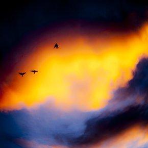 Fly-Away-Photograph_Eric-Christopher-Jackson_Treniq_0