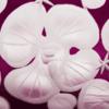 Isadora crystal champagne saucer   amethyst rachel bates interiors ltd treniq 1 1491836539004