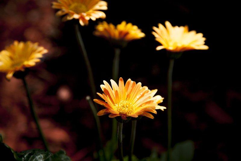 Garden light eric christopher jackson treniq 1 1494538476831