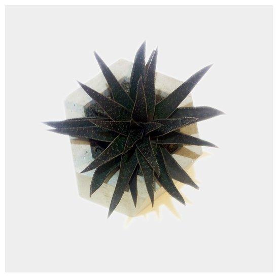 Planter karan desai design treniq 1 1497098276489