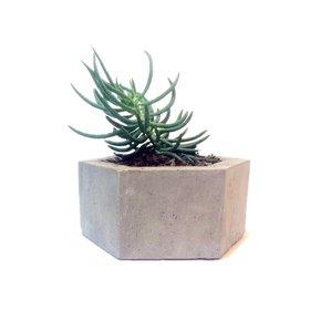 Planter-Iii_Karan-Desai-Design_Treniq_0