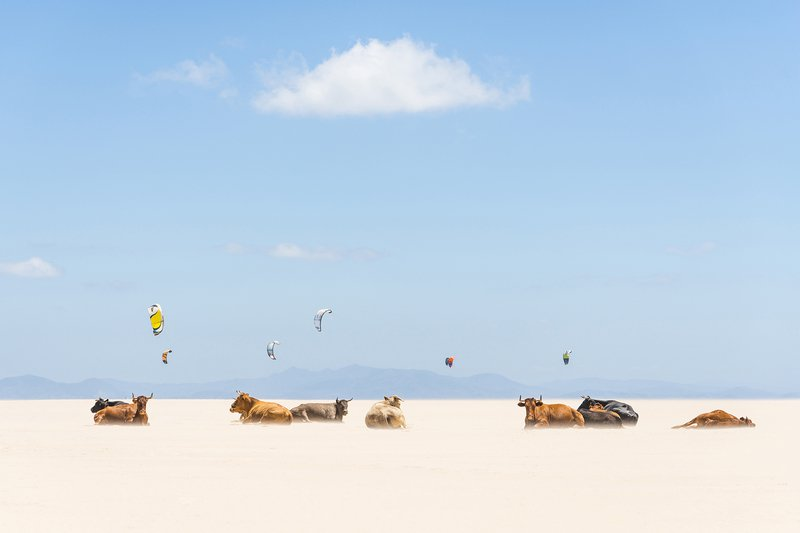 Cows and kites andrew lever fine art treniq 1 1501681222680