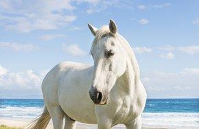 Beach-Horse-Photograph_Andrew-Lever-Fine-Art_Treniq_0