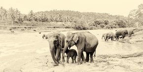 River-Elephants-Print_Andrew-Lever-Fine-Art_Treniq_0