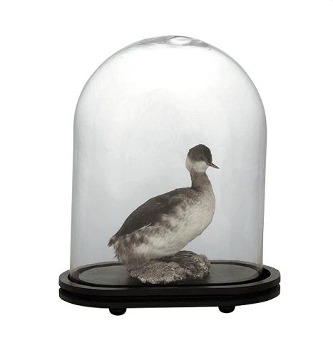 Glass bell jar   eichholtz trapani eichholtz by oroa treniq 1 1505815801884