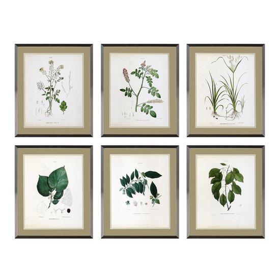 Eichholtz botanica prints (set of 6) eichholtz by oroa treniq 1 1506841944749