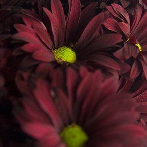 Individuality-Photograph_Eric-Christopher-Jackson_Treniq_0