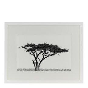 Acacia-Landscape_Jess-Latimer_Treniq_0