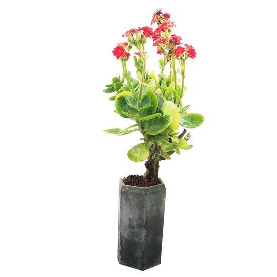 Slim planter karan desai design treniq 1 1519452305172