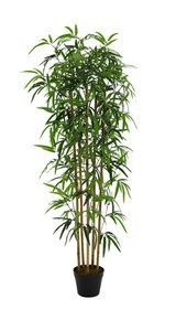 Artificial Bamboo I