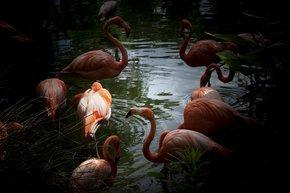 Flamingos_Eric-Christopher-Jackson_Treniq_0