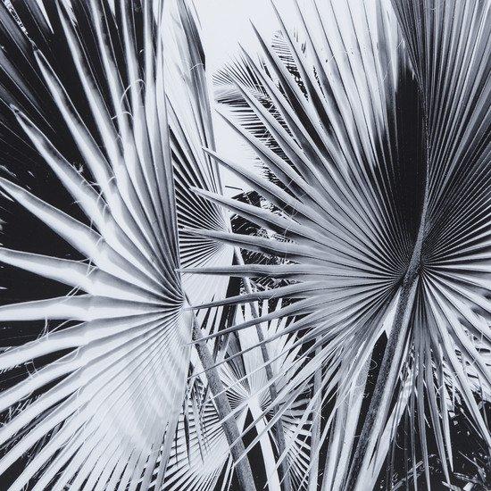 Black   white palm leaves c  sonder living treniq 1 1527739800087