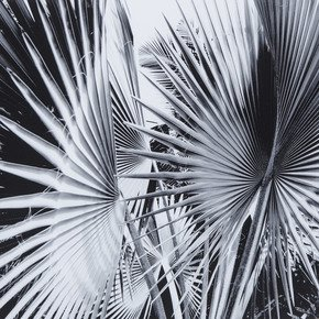 Black-&-White-Palm-Leaves-C-_Sonder-Living_Treniq_0